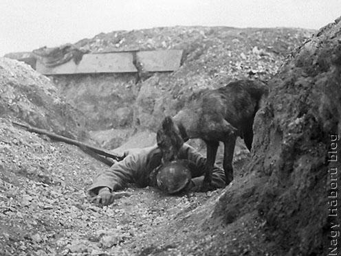 Egészségügyi kutya kiképzése a francia hadseregben
