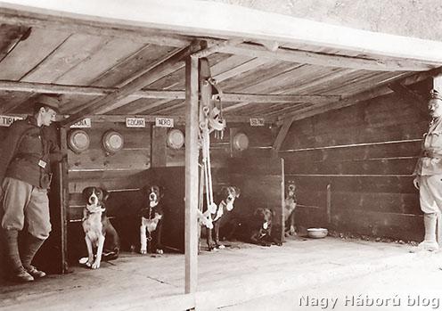 Kutyavonattelep kutyakunyhókkal