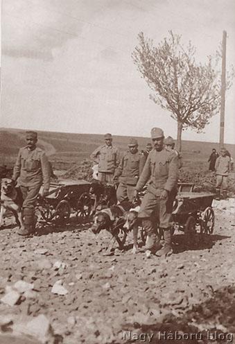 Útépítéshez használt kutyavonat az osztrák-magyar hadseregben