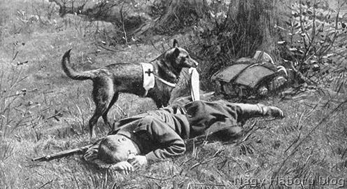 Vöröskeresztes kutya megtalál egy sebesült katonát