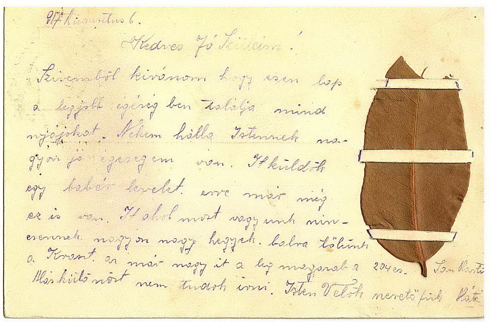 A levelezőlap a babérlevéllel