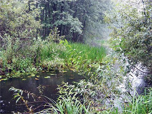 A Stochod egyik dús vegetációval borított romantikus ága