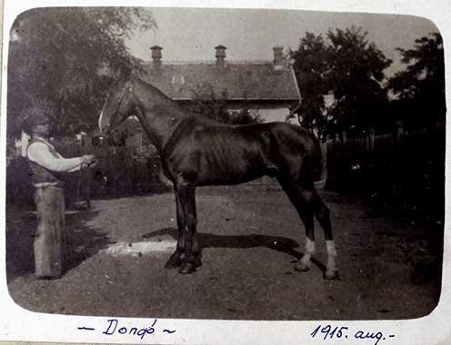 """A """"kosorrú"""" Dongó: Hegedős Károly lova 1915 augusztusában"""