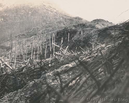 Letarolt erdő a Tolmein fölötti hegyekben