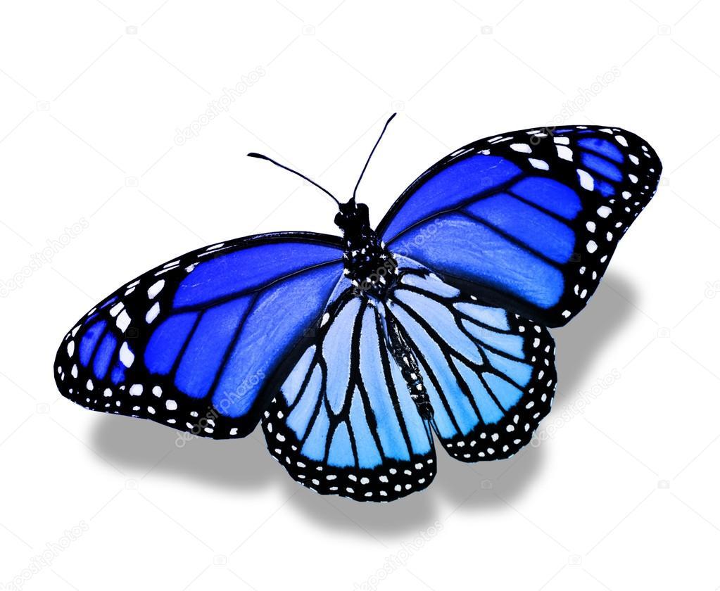depositphotos_40351321-stock-photo-blue-butterfly.jpg