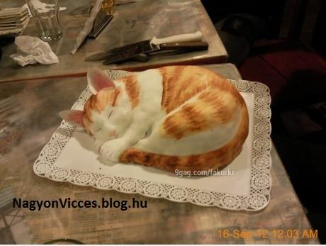 cica torta képek CICA TORTA   NagyonVicces cica torta képek