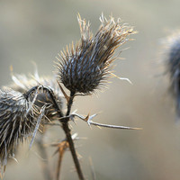 Dry weeds