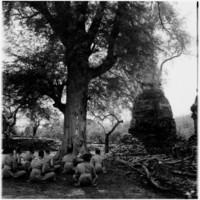 Monks in Ayutthaya