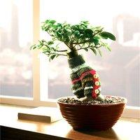 szobanövény kötöttpulcsival