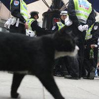 Egy macska csatlakozott a kínai járőrökhöz