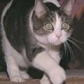 Macska lesz az esküdtszék tagja?