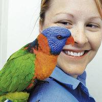Csengőhangutánzó papagáj