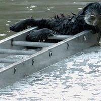 17 tűzoltó mentett ki egy kutyát a befagyott tóból
