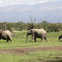 Elefántok törtek be egy angolai faluba