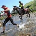 A lovak megint gyorsabbak voltak, mint az emberek