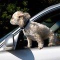 Megbüntették azt a férfit, aki autójából sétáltatta a kutyáját