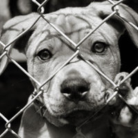 Szükségük van-e az állatoknak ügyvédre?