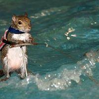 Vízisielő mókus