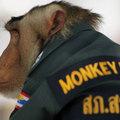 Thaiföldön rendőrnek állt egy majom