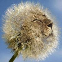 Eltűnhet a teljes állat- és növényvilág egyharmada