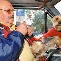 Kutyája navigálja a taxisofőrt