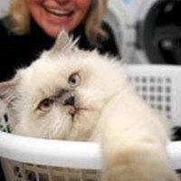 A macska túlélte a mosást a mosógépben