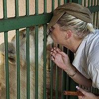 Egy nő két hétig él együtt két fehér oroszlánnal
