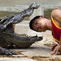 Veszélyes munka a krokodil birkózás