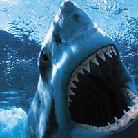 Esküvő cápáktól hemzsegő akváriumban