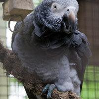 Lelőtte saját papagáját, mert zavarta a tévézésben