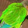 A papagájt hazacsábította az alkohol