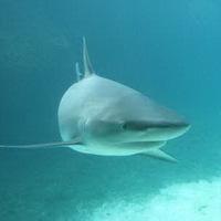 Petíció a cápauszony-leves ellen