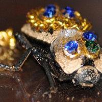 Lefoglalták egy nő élő bogár kitűzőjét