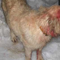 A kutya megmentette gazdáját a pumától