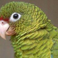 55 000 eurót költött papagája kemoterápiás kezelésére