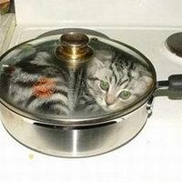 Terítéken a macska