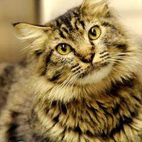 Otthonától 1300 km-re találtak meg egy macskát