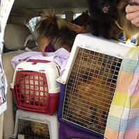 12 macskával és 11 kutyával élt összezárva egy autóban