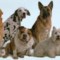 New Jersey-ben tilos a kutyáknak ugatni