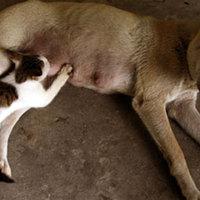 Kutya fogadott örökbe egy macskát