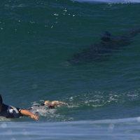 Cápa elől menekült meg egy szörföző Dél-Afrikában