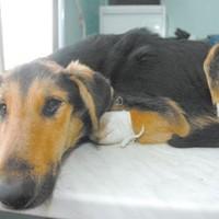 Borzalmas! Egy kutyát megfosztottak mancsaitól Belgrádban