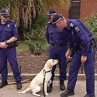 Letartóztatták, mert meg akart csókolni egy rendőrkutyát