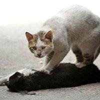A macska megpróbálta újraéleszteni barátját