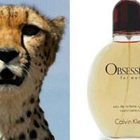 Calvin Klein parfümje a nagymacskák gyengéje