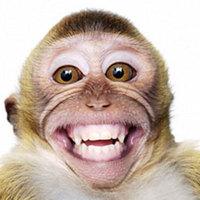 A majom elleste gazdájától, hogy hogyan kell levágni a tyúkot