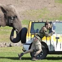 Az elefánt segített megtolni gondozója autóját