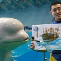 Festőművész beluga bálna