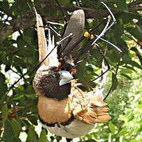Madarat zsákmányolt egy pók