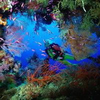 Az óceánok mikrobákban bővelkednek